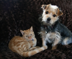 A cute dog and cat